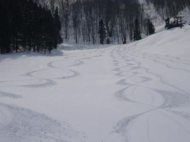 タングラムスキーサーカスの写真