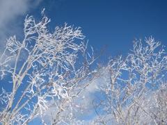 当日は快晴。前日の天気予報で「冬型」の気圧配置が表示されていたので悪天候を予想していましたが、良いほうへ期待を裏切る形でとてもありがたい1日でした。 前日夜間に適度な降雪があり、ゲレンデコンディションは申し分ありませんでした。また降雪のお陰でコースOPEN状況も前々日のホームページ告知よりかなり改善され、キャプテンコース以外は全て滑走可能!という、BESTに近い状況でした。地理的な関係から、積雪状況の厳しいシーズンでは滑走コースがかなり限定されてしまう印象が強いのですが「2014シーズンは一味違う」かも知れません。