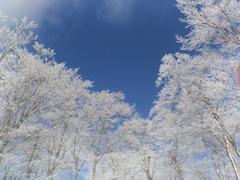 マイナス9度と翌冷えたスキーJAMのゲレンデ、樹氷がきれいで青空によく映えます。ゲレンデ状態はもちろん最高です。
