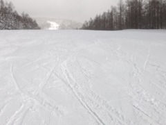 2019年初滑り
