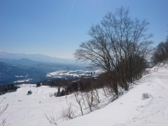 雪質シャバシャバ。雲ひとつない青空、こんな天気の日はのんびり景色を楽しみながら林間コースを滑ると気持ち良いですね。