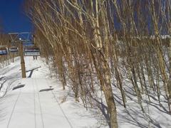数日前40センチの積雪があったらしく、とても良かったらしい。その時来たかった・・・それでも、いつものいいコンディションで気持ちよく滑走。ホント、感謝!