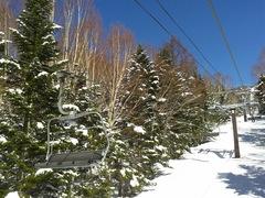 春スキーと思えないくらい、最高のコンディションで滑走スタート。ランチまで休みなく楽しめました。さあ来週は???
