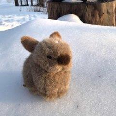 野麦ウサギ